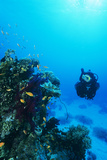 Diver with Fairy Basslet Shoal Poster by Alexis Rosenfeld