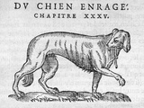 Woodcut of a Rabid Dog Photographic Print by Middle Temple Library