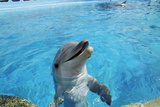 Dolphin In Captivity Photo by Alexis Rosenfeld