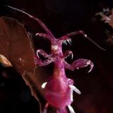 Skeleton Shrimp Photographic Print by Alexander Semenov