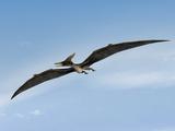 Pteranodon Pterosaur, Artwork Photographic Print by Friedrich Saurer