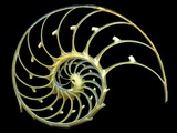 Sectioned Shell of a Nautilus Photographic Print by  PASIEKA