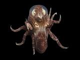 Amphipod Crustacean Photographic Print by Alexander Semenov
