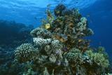 Coral Reef Prints by Alexis Rosenfeld