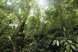 Tropical Rainforest, Borneo Print by Robbie Shone