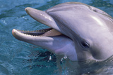 Bottlenose Dolphin Photographic Print by Alexis Rosenfeld