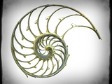 Sectioned Shell of a Nautilus, Artwork Photographic Print by  PASIEKA