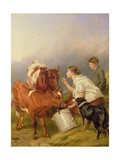 The Favoured Calf Giclee Print by Richard Ansdell