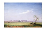 Emus on the Trap Plain Giclee Print by Thomas Baines