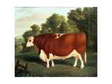 Ox, C.1850 Giclee Print by Thomas Roebuck