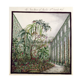 The Greenhouse at Aynhoe, 1846 Giclee Print by Lili Cartwright