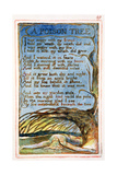 A Poison Tree: Plate 49 from Songs of Innocence and of Experience C.1815-26 Giclee Print by William Blake
