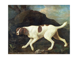 Phillis, a Pointer of Lord Clermont's, 1772 Giclee Print by George Stubbs