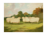 Study of Sheep in a Landscape Giclee Print by Richard Whitford