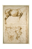 Anatomic Horse Study, 1504 Giclee Print by  Michelangelo Buonarroti