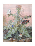 Insects around a Thistle, 1700 Giclee Print by Margaretha Barbara Dietzsch