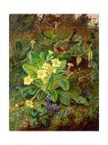 Primrose and Robin Giclee Print by William John Wainwright
