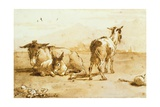 Pd.32-1959 Two Donkeys and a Goat in a Landscape Giclée-tryk af Giandomenico Tiepolo
