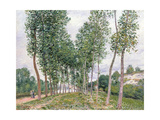 The Avenue of Poplars Along the Banks of the Loing, 1892 Giclee Print by Alfred Sisley