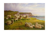 Sheep on a Dorset Coast Giclee Print by Charles Jones