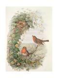 Robin, 1873 Reproduction procédé giclée par John Gould