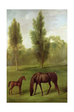 A Chestnut Mare and Foal in a Wooded Landscape, C.1761-63 Giclee Print by George Stubbs
