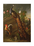 Peacock and Cockerels, 17th Century Giclee Print by David de Koninck