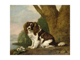 Fanny, a Brown and White Spaniel, 1778 Giclee Print by George Stubbs