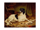 'Minna', a Favourite Dog of James, Marquess of Dalhousie, 1857' Giclee Print by Gourlay Steel