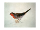 Robin, from the Farnley Book of Birds, C.1816 Giclee Print by J. M. W. Turner