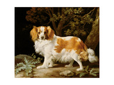 A Liver and White King Charles Spaniel in a Wooded Landscape, 1776 Giclee Print by George Stubbs