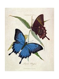 Butterfly: Papilo Ulysses, Pub. by the Artist, 1800 Giclee Print by Edward Donovan
