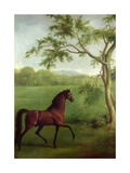 An Arabian Stallion Beneath a Tree, C.1761-63 Giclee Print by George Stubbs