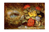 Flowers and Bird's Nest with Butterfly and Mushroom Giclee Print by Oliver Clare