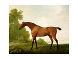 A Bay Thoroughbred in a Landscape, 1801 Giclee Print by George Stubbs