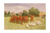 Cows and Ducks Giclee Print by Claude Cardon