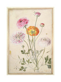 Flower Study, C.1760 Giclee Print by Thomas Robins