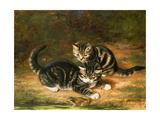 Gatitos Lámina giclée por Horatio Henry Couldery