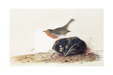 A Robin Perched on a Mossy Stone Giclee Print by John James Audubon