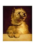 Cairn Terrier Giclee Print by George Earl