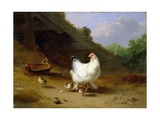 A Hen with Her Chicks Giclee Print by Eugene Joseph Verboeckhoven