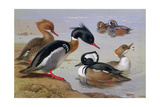 Ducks by a Lake Giclee Print by Archibald Thorburn