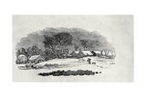 Endpiece, Late 18th or Early 19th Century Giclee Print by Thomas Bewick