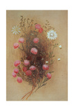 Melaleuca or Flannelflower, 19th Century Giclee Print by Lady Margaret Forest