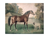 'Dungannon' Giclee Print by George Townley Stubbs