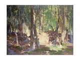 Morning in the Woods Giclee Print by Harry Watson