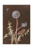 Pd.380-1973 Dandelion (Taraxacum Officinale) with Insects Giclee Print by Margaretha Barbara Dietzsch