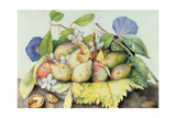 Still Life with Plums, Walnuts and Jasmine Giclee Print by Giovanna Garzoni