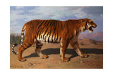 Stalking Tiger Giclee Print by Rosa Bonheur