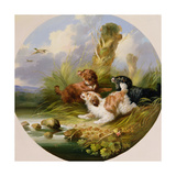 Three Spaniels Flushing Mallard Giclee Print by George Armfield